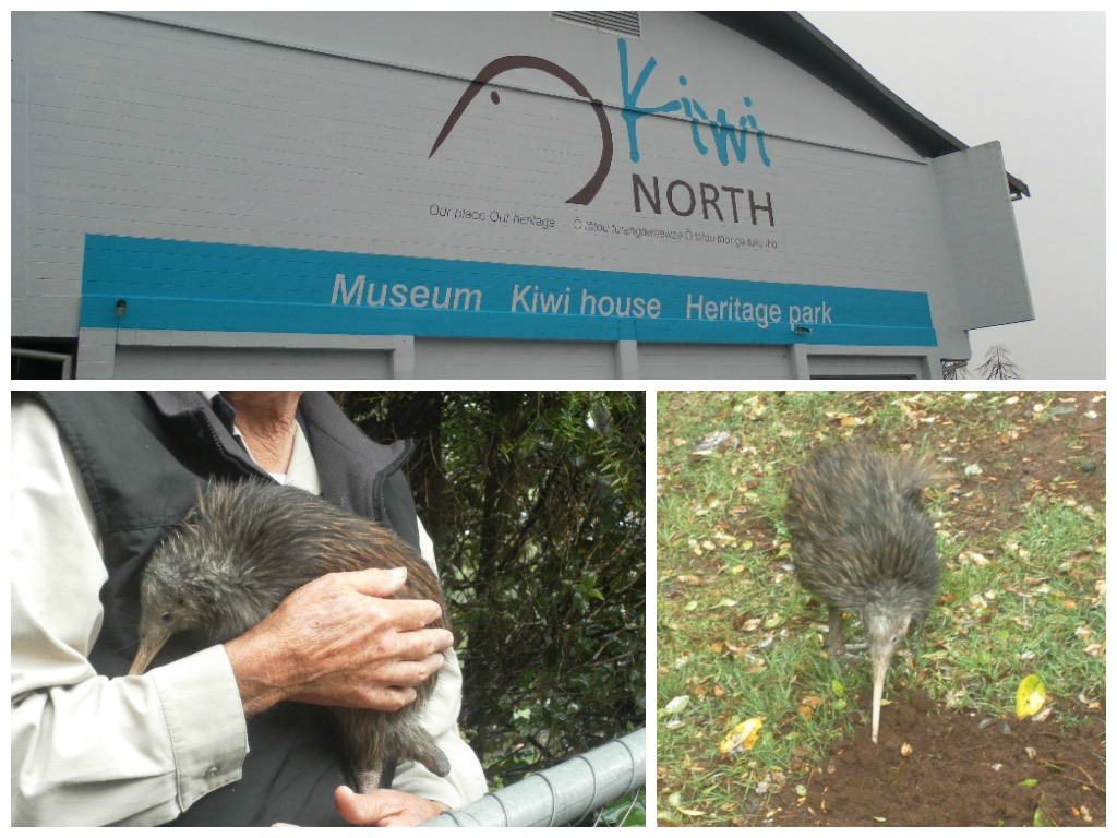 Kiwi North Kiwi House